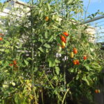 家庭菜園と株式投資